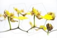 33_orquidea.jpg