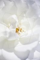 33_rosa-iceberg.jpg